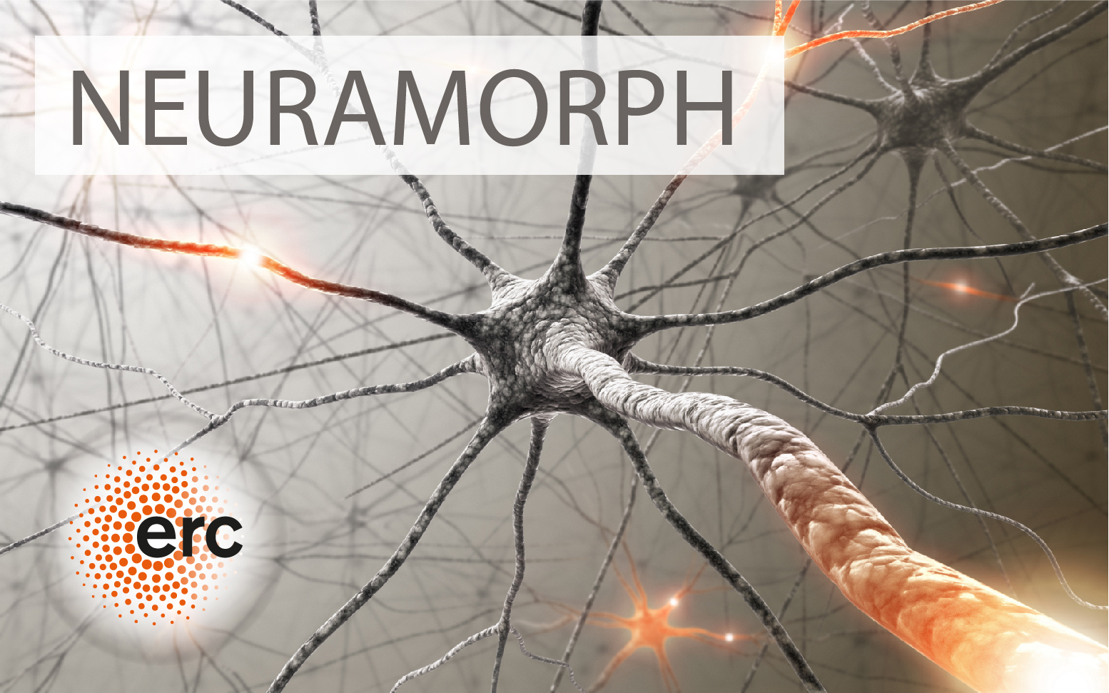 The NEURAMORPH project